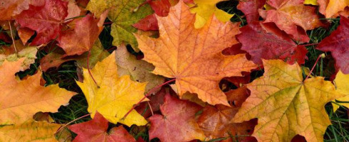 L'automne – les pommes – PS